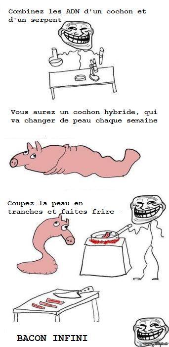 Cochon hybride